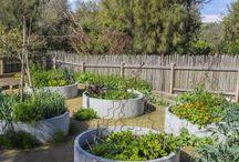 garden : vegetable
