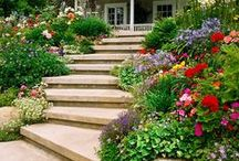 Planting on a slope/rock gardens / Inspiration for planting in the walled garden