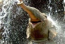 Elephants / The most beautiful animals in the world.