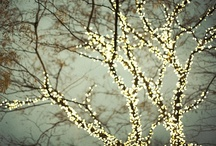Branches / by Phoebe