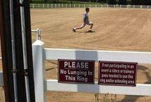 Equestrian Humour