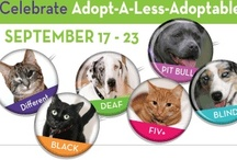 """Adopt A Less Adoptable Pet Week / Many factors can make a pet seem """"less adoptable."""" To promote these unusual (or, in some cases, too common) animals, Petfinder has designated an """"Adopt-A-Less-Adoptable-Pet Week."""""""