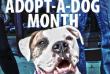 Adopt A Shelter Dog Month (October) / The best way to honor Adopt a Shelter Dog Month is by…adopting a shelter dog, of course! Find the right four-legged friend for you.