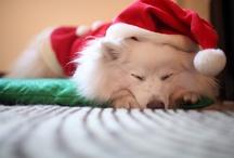 Operation Santa Paws (December)