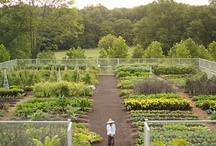 Garden / A board devoted to the beautification and design of outdoor spaces, included vegetable gardens.