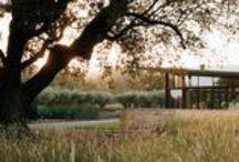 Andrea Cochran / A board devoted to the style and work of Landscape Architect Andrea Cochran.