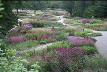 Piet Oudolf / A board devoted to the work and style of landscape designer Piet Oudolf.