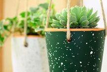 Plantas / Nos gusta vivir con plantas alrededor.