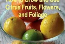 Grow and Use Citrus Fruits / Pictures of oranges, lemons, and other citrus fruits, along with ideas about how to grow and use them.