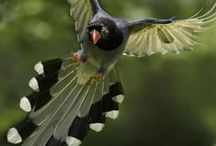 Amazing Bits of Nature / Here are images of things found in nature, not man made,