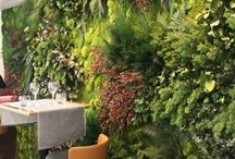 Green Walls and Roofs / Green plants grow everywhere! Use them on walls and roofs for beauty, stormwater runoff prevention, and healthy living.