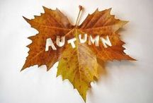 AUTUMN / Pumpkins, fall colored foliage and all things Autumn.