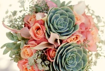 succulent / by Amy Trevino Getz