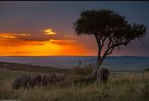 Africa / Africa, the world's second-largest continent, features amazing sites including the beautiful Masai Mara National Reserve and Cango Caves in South Africa. What are your favorite destinations in Africa?