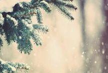 'Tis the Season  / by Tina Joudry