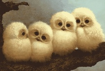 Owl Always Love You / by Anji Kauffman