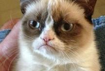 Grumpy Cat Deserves Her Own Board!