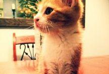 Kitty Kat / by Tina Joudry