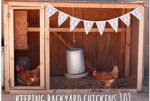 Homesteading - Group Board / A board for homesteading related posts ranging from small/urban homesteading to large-scale, off-grid homesteading.