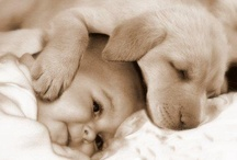 My love for animals ♡ / by Courtney Guzman
