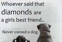 DOGS Are a Girl's Best Friend / by Karen Meinecke