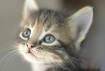 Come Here Kitty Kitty / by Petra Maricela Thompson Violetarojo