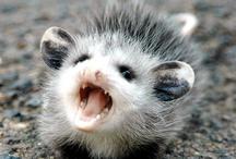 Too Cute / Animals and Children and things that make you wanna squeal- OOOOHhhh SOooooo CUUuute.