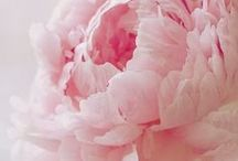 floral power / Freshly picked for the season! All things #blossoms and #flowers that inspire us.