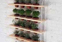 jardinagem | home