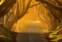 Magical Places and Spaces (TRAVEL) / Pack your bags!!! / by Rosalyn Wilson