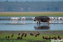 Zululand and the Elephant Coast