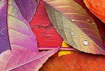 colors in nature / by Barbara Shilling