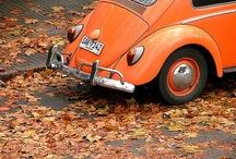***fall*** / by Suzy Schwanke