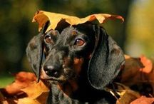 Autumn Living / Autumnal pictures that have caught our eye - and a few of our products in an autumn setting