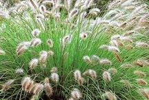Tuin | garden