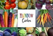 Baby Food Garden
