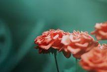 colour  / by Laura Allison