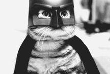 Kitties / by Sarah Kleemann