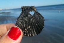 The World [¡Mucho Aloha!]  / Sand, Salt Water, SeaShells, Hibiscus & Shaka! / by LeAndra Velasquez