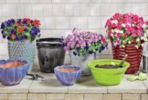 Lawn & Garden / Get out and smell the flowers! / by Shopko