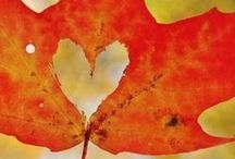 Autumn Inspiration / Red, yellow, and orange! Bring the colors autumn into your home and classroom with these ideas and resources for the fall season.