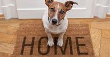 Pet Friendly Home Decorating Ideas / From flooring to furniture, snag some great ideas here for creating a pretty #PetFriendly Environment.