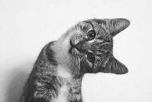Meow / by Sarah Cinski