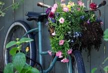 garden/backyard / by Kathleen Summers