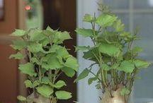 Plants For inside!