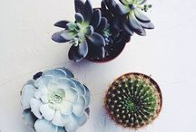A Succulent obsession / And other indoor plants