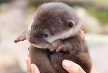 Cute Animals / by JeannieRichard