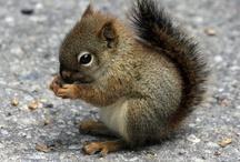Squirrels... :)
