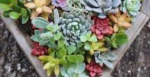 Terrariums / I am truly fascinated and in love with terrariums.  I have some at home but not as many as I would like.