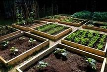 GARDENING / YUMMY VEGETABLE GARDENS  ( HOW TO,  PLANTING AND TIPS ) / by REGLA ORUE